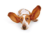 DOG 08 RK0093 02