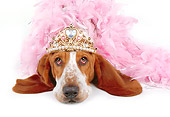 DOG 08 RK0094 03
