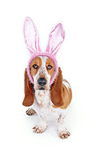 DOG 08 RK0095 01