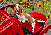 DOG 08 RK0105 04
