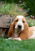 DOG 08 RK0112 01