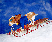 DOG 08 RK0120 04