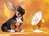 DOG 08 XA0001 01
