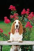 DOG 08 CE0001 01