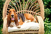 DOG 08 CE0005 01