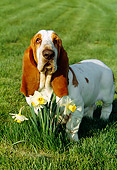 DOG 08 LS0002 01