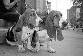DOG 08 MQ0003 01