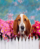 DOG 08 RK0014 13