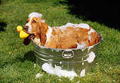 DOG 08 RK0018 02