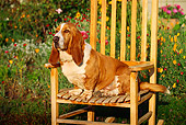 DOG 08 RK0021 08