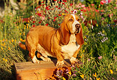 DOG 08 RK0023 18