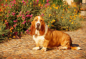 DOG 08 RK0024 02