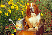 DOG 08 RK0025 09