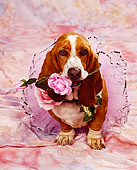 DOG 08 RK0038 04