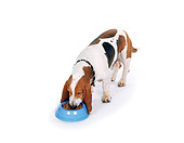 DOG 08 RK0048 01