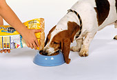 DOG 08 RK0051 03