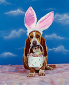 DOG 08 RK0073 03
