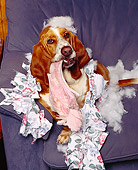 DOG 08 RK0074 10