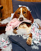 DOG 08 RK0074 22