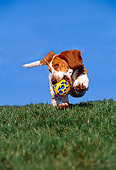 DOG 08 RK0090 05