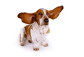 DOG 08 RK0092 11