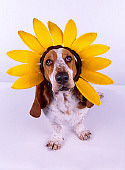 DOG 08 RK0096 01