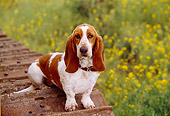 DOG 08 RK0102 04