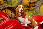 DOG 08 RK0105 11