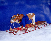 DOG 08 RK0120 18