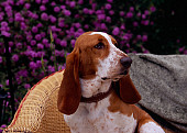 DOG 08 RK0122 01