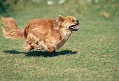DOG 09 AB0001 01