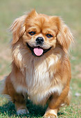 DOG 09 AB0002 01