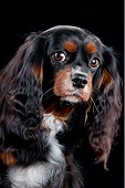 DOG 09 AC0005 01
