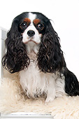 DOG 09 AC0013 01