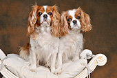 DOG 09 AC0020 01