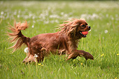 DOG 09 AC0028 01