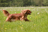 DOG 09 AC0029 01
