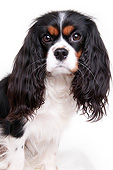 DOG 09 AC0031 01