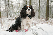 DOG 09 AC0032 01