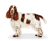 DOG 09 BK0002 01