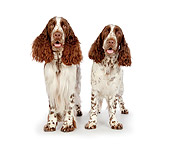 DOG 09 BK0003 01