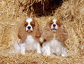 DOG 09 CB0004 01
