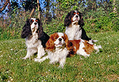 DOG 09 CB0006 01