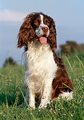DOG 09 CB0012 01