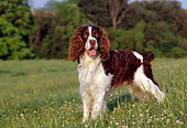 DOG 09 CB0013 01