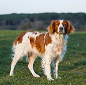 DOG 09 CB0017 01