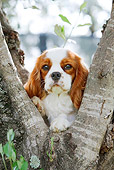 DOG 09 CB0018 01