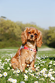 DOG 09 CB0021 01