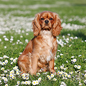 DOG 09 CB0023 01