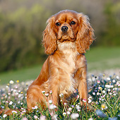 DOG 09 CB0024 01